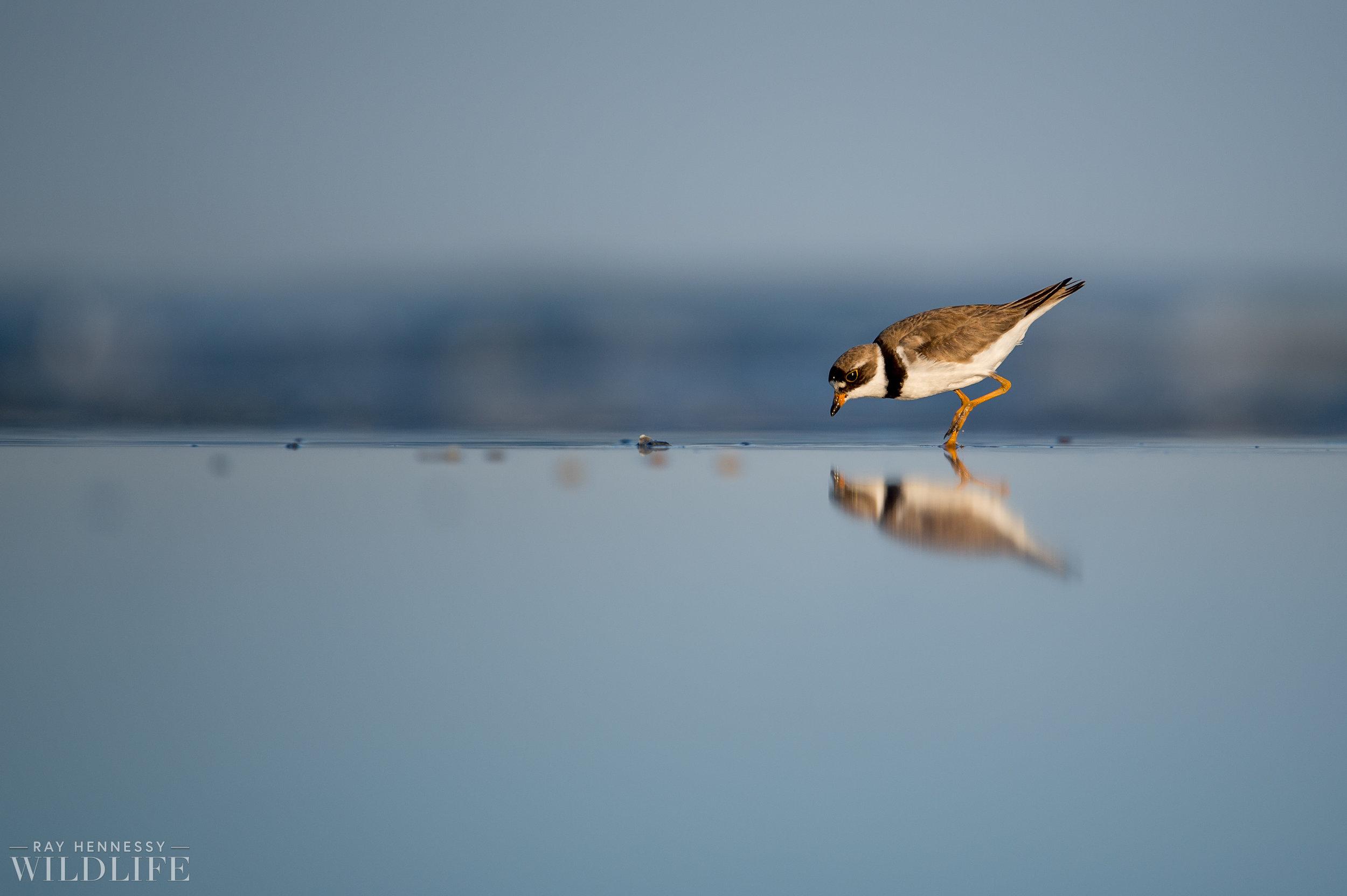 009_fall shorebirds.jpg