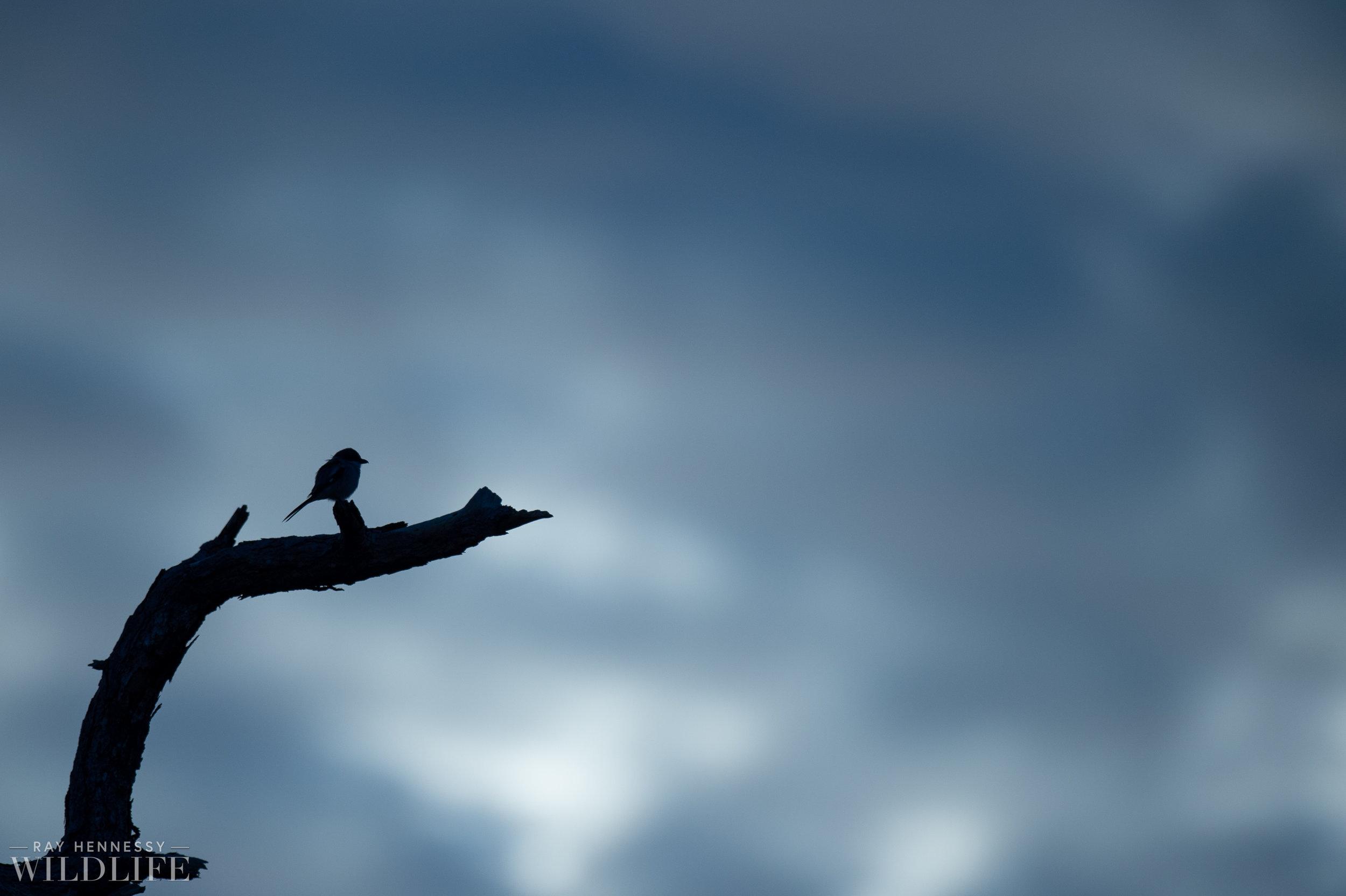 002_florida-grassland-birds.jpg