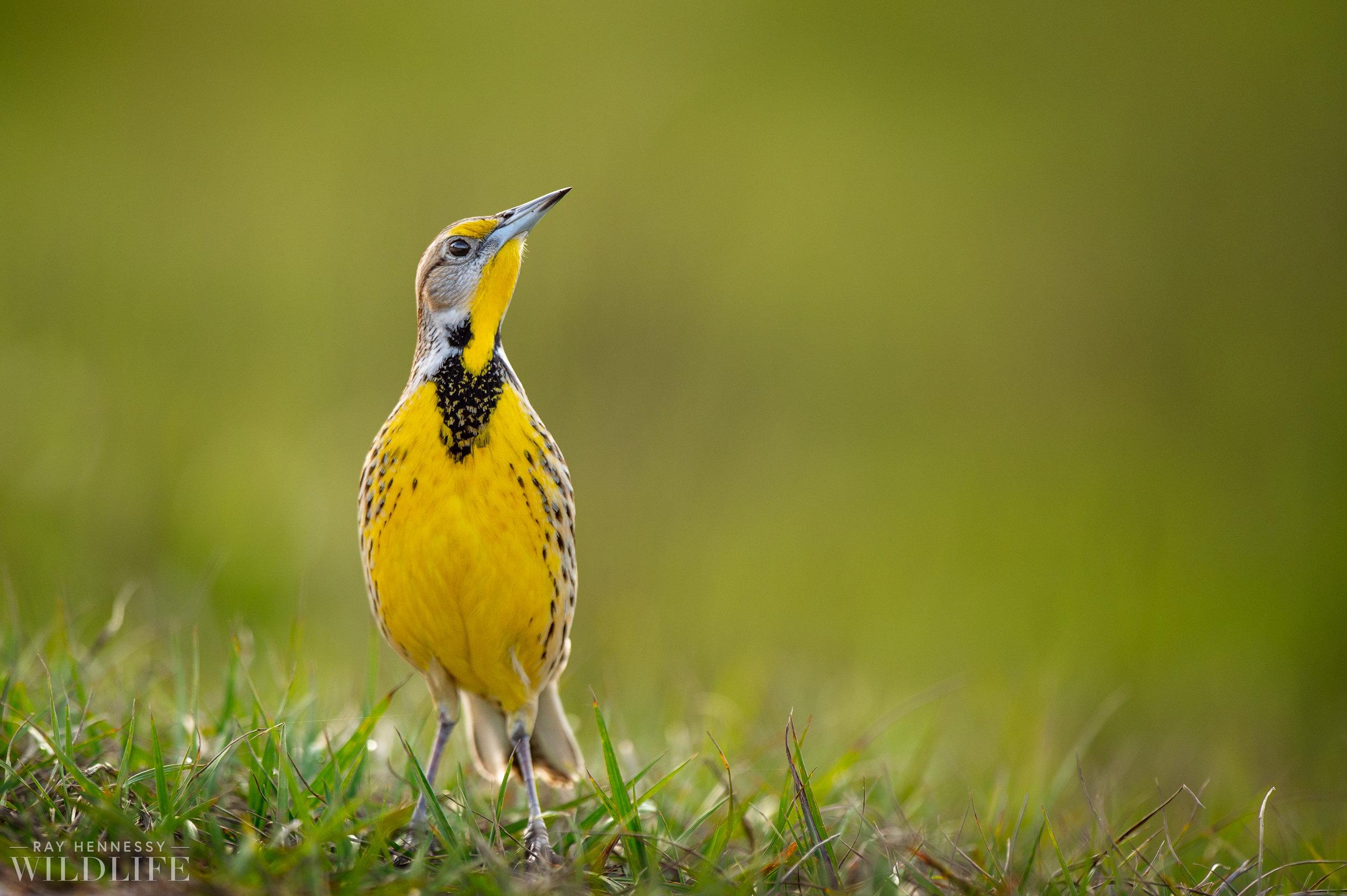 001_florida-grassland-birds.jpg