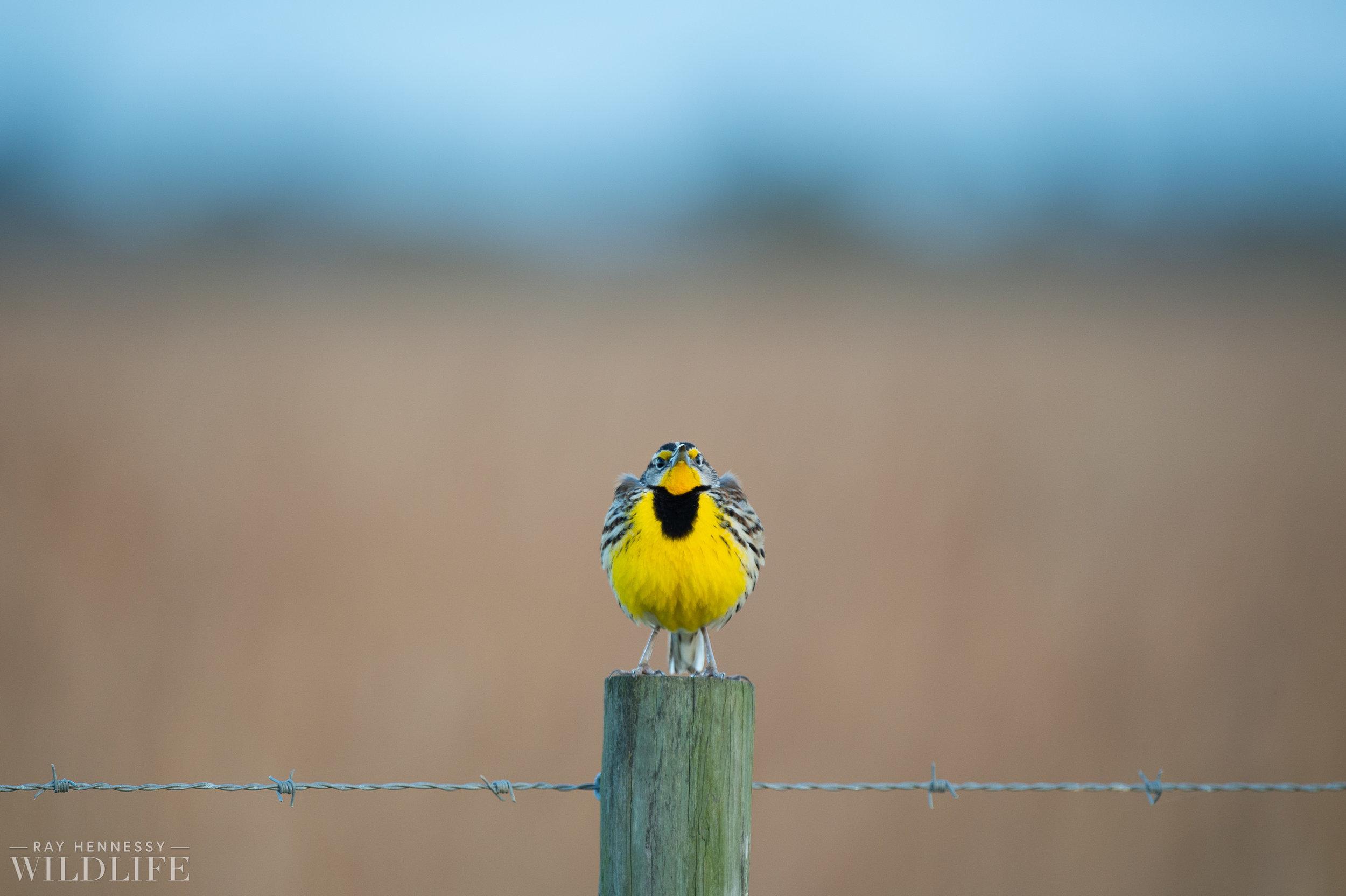 003_florida-grassland-birds.jpg