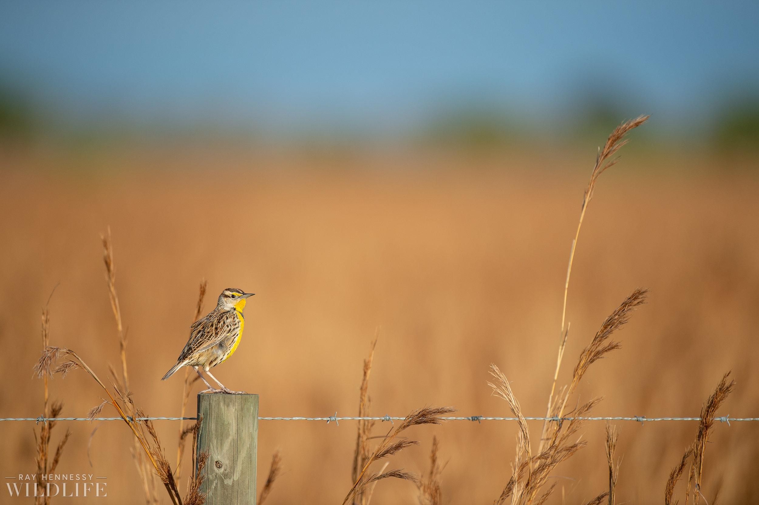 004_florida-grassland-birds.jpg
