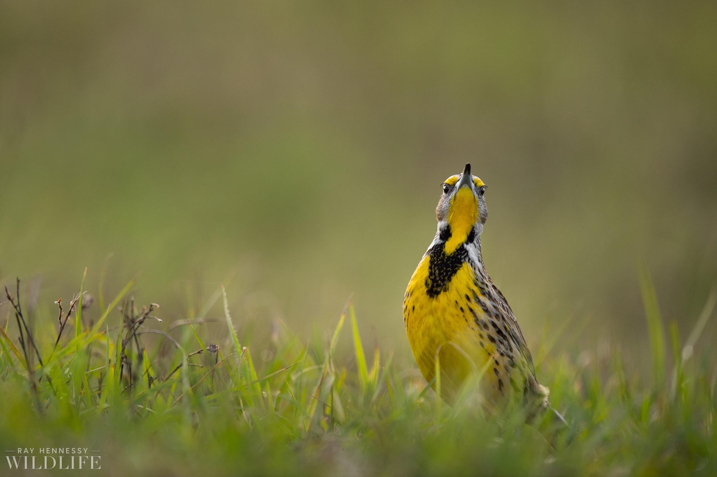 005_florida-grassland-birds.jpg