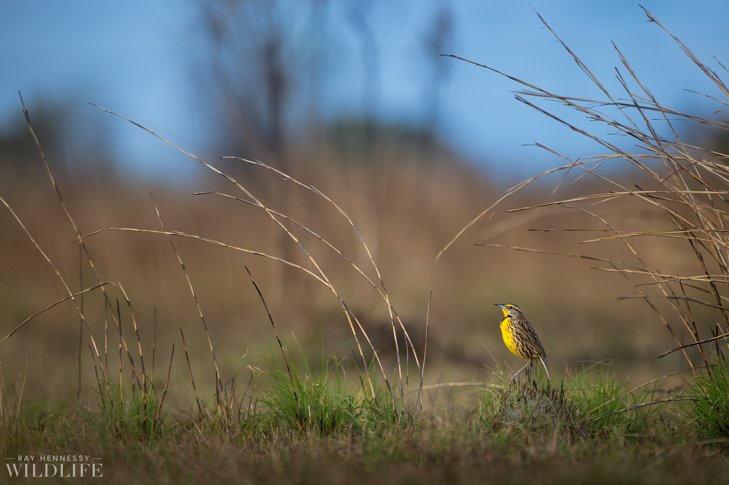 006_florida-grassland-birds.jpg