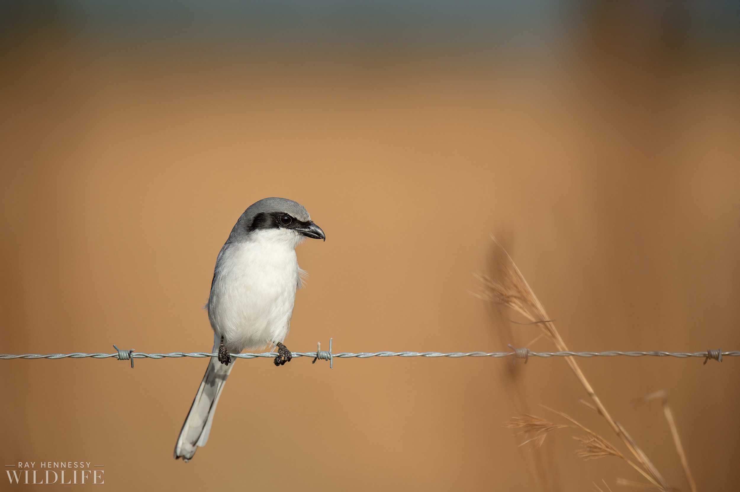 007_florida-grassland-birds.jpg