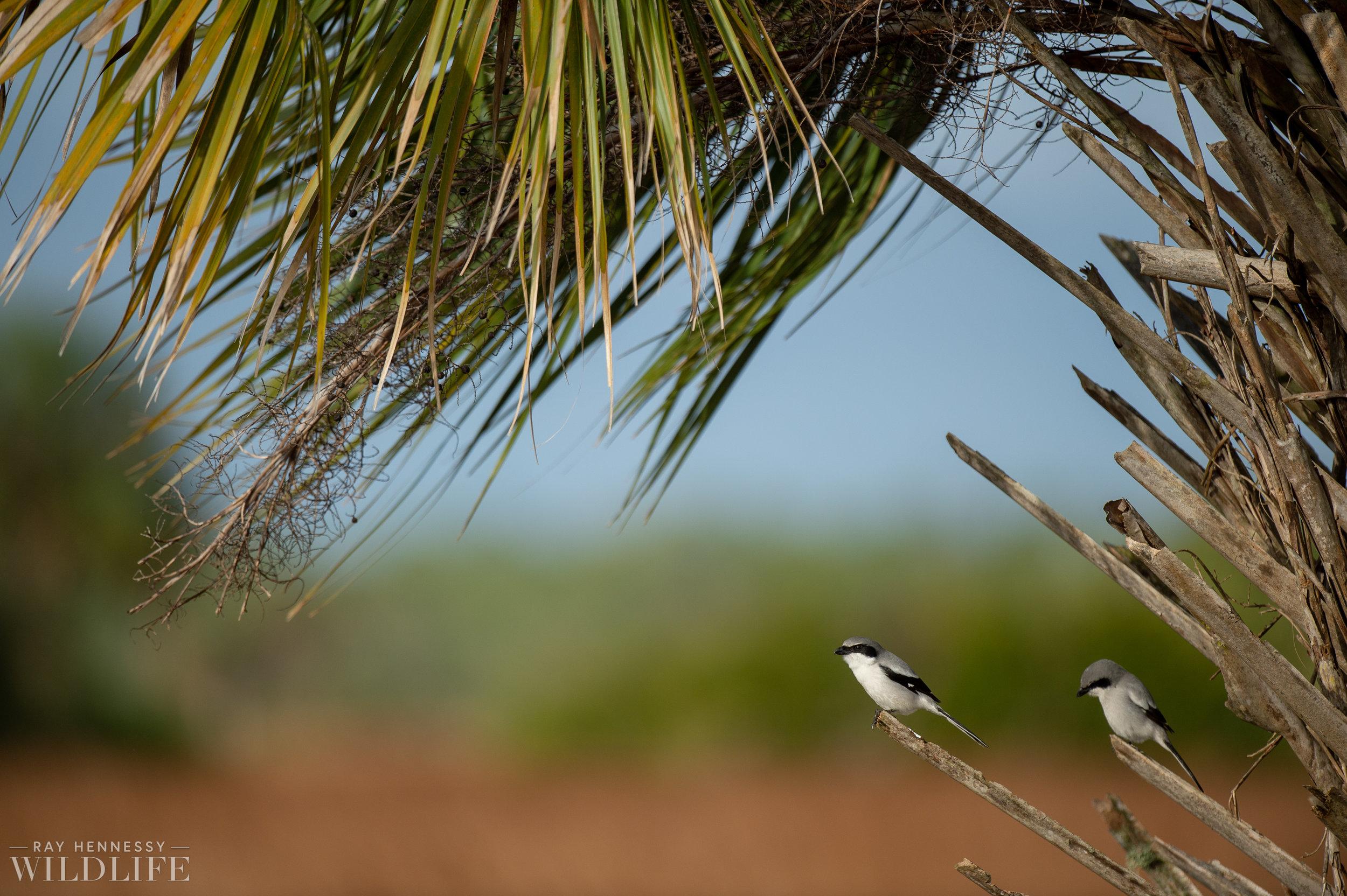 008_florida-grassland-birds.jpg