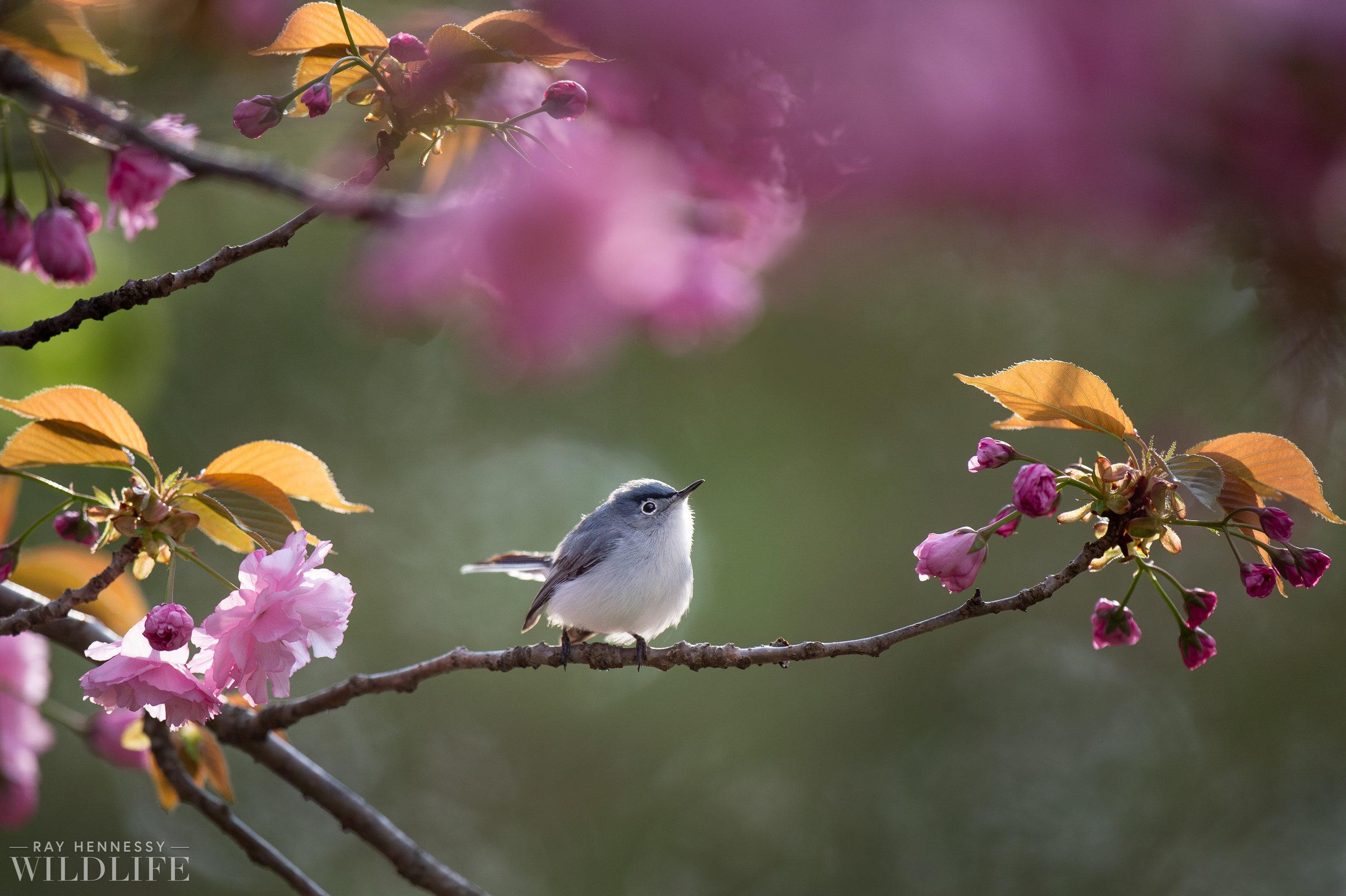 001_spring-warblers-new-jersey.jpg