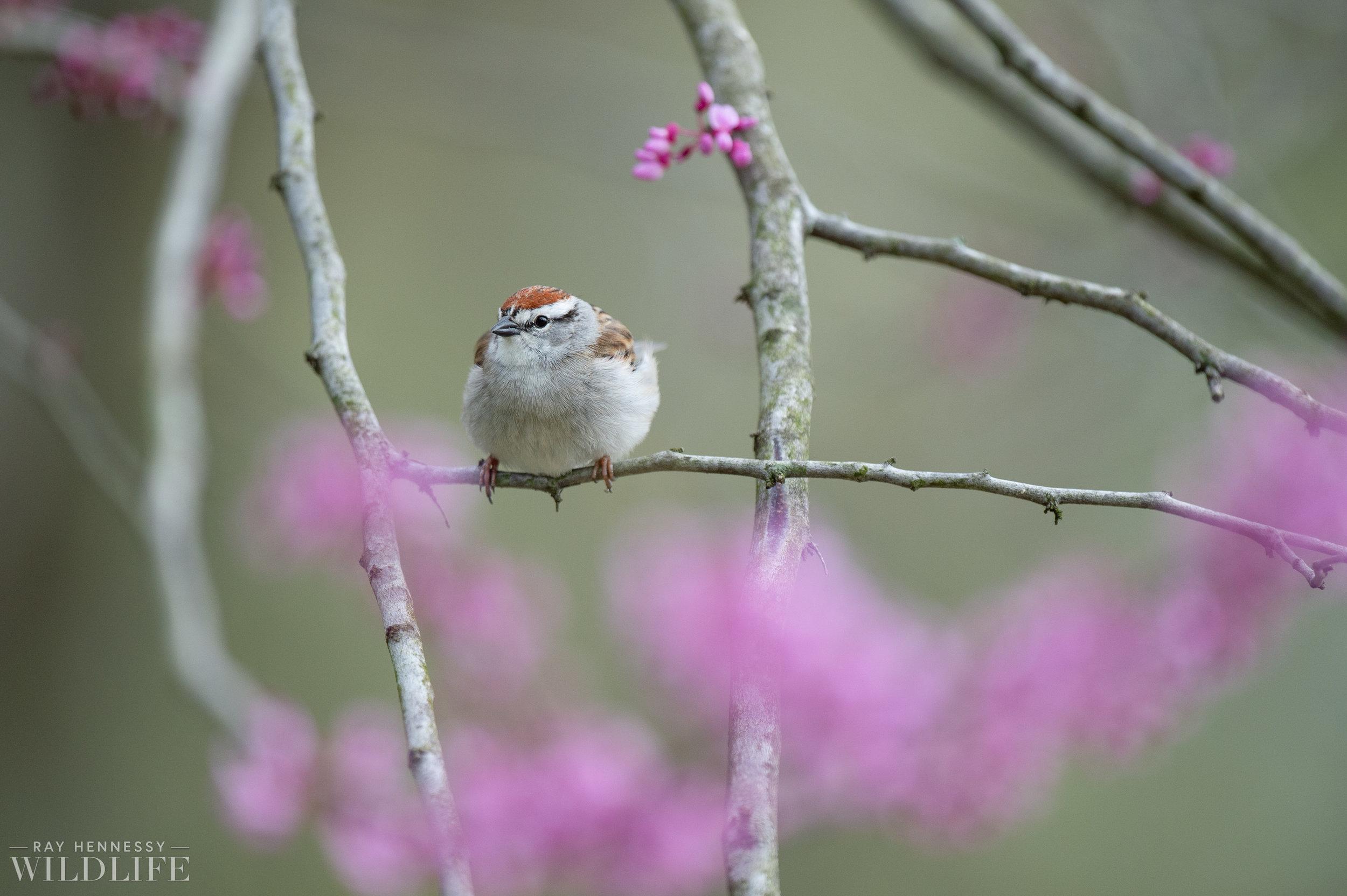 020_spring-warblers-new-jersey.jpg