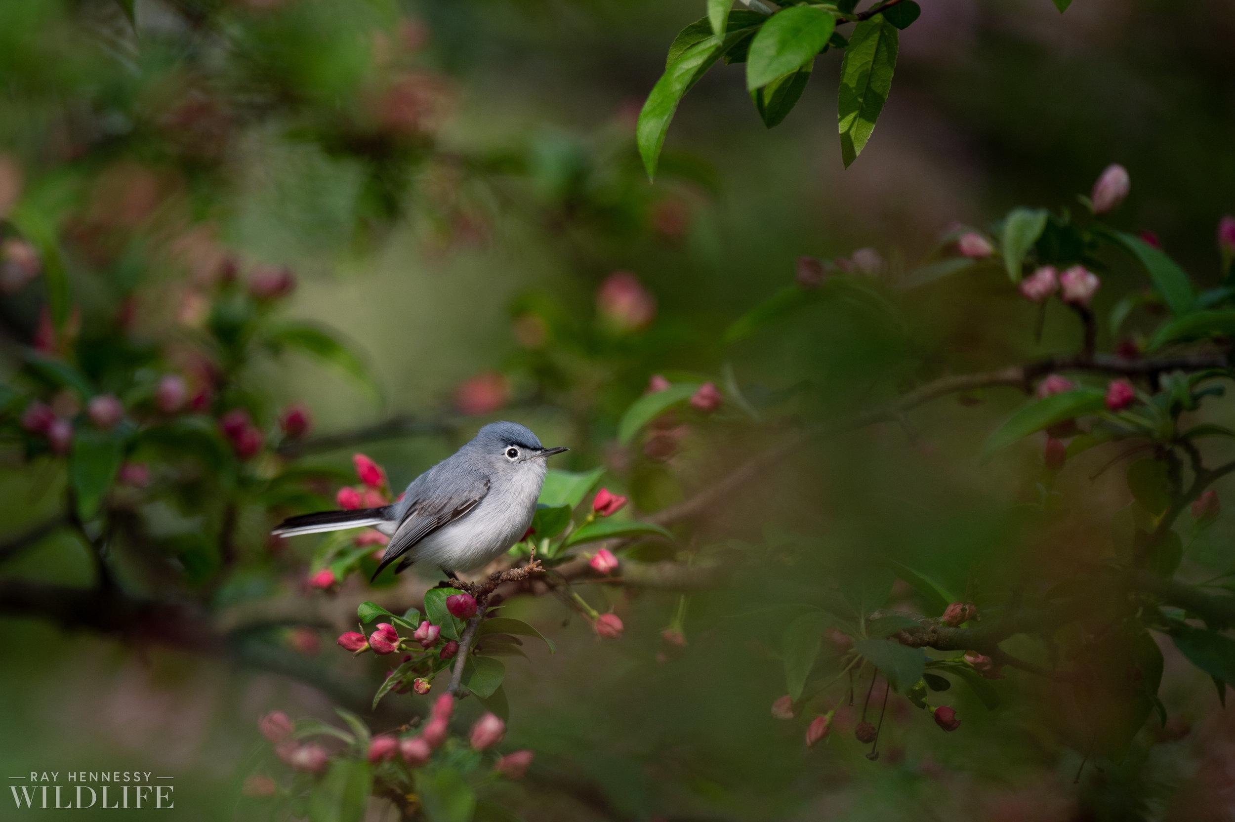 028_spring-warblers-new-jersey.jpg