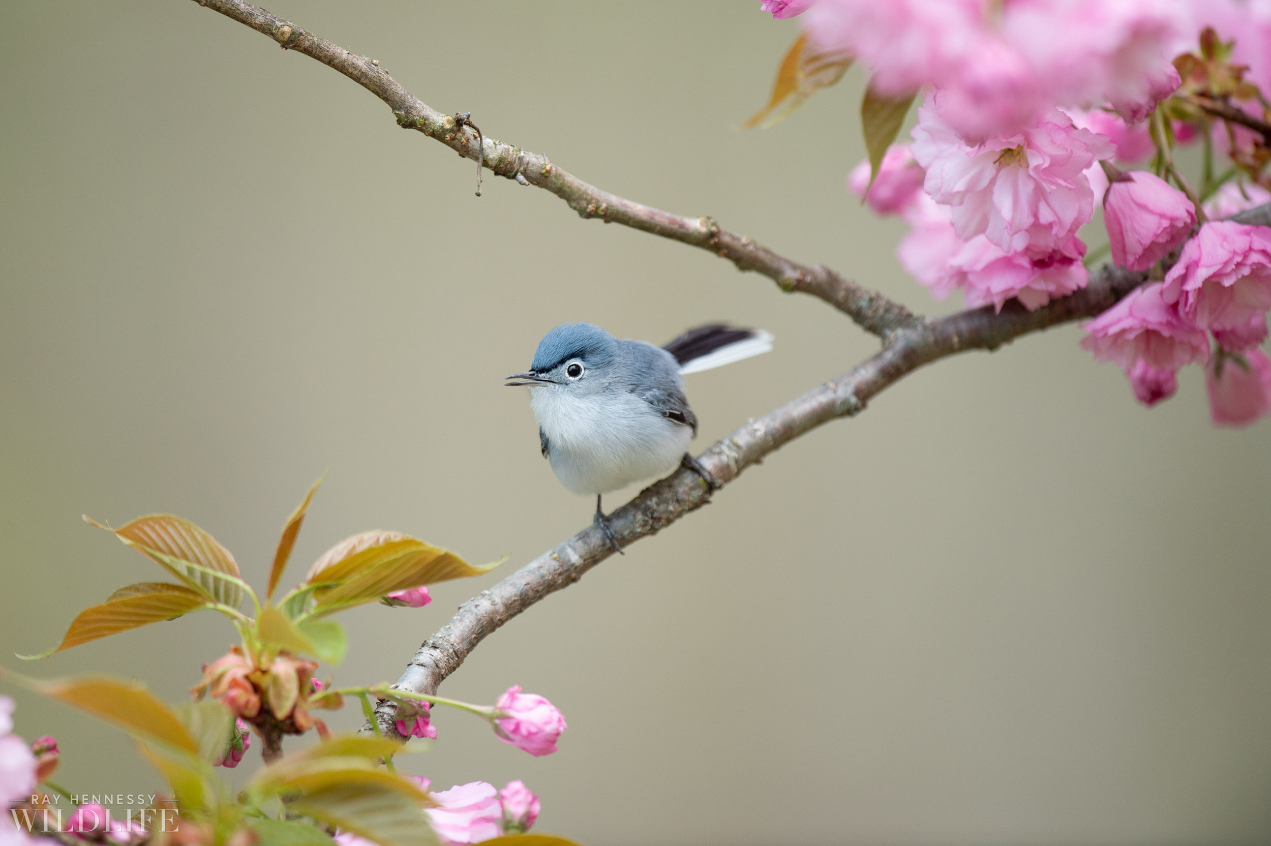 031_spring-warblers-new-jersey.jpg