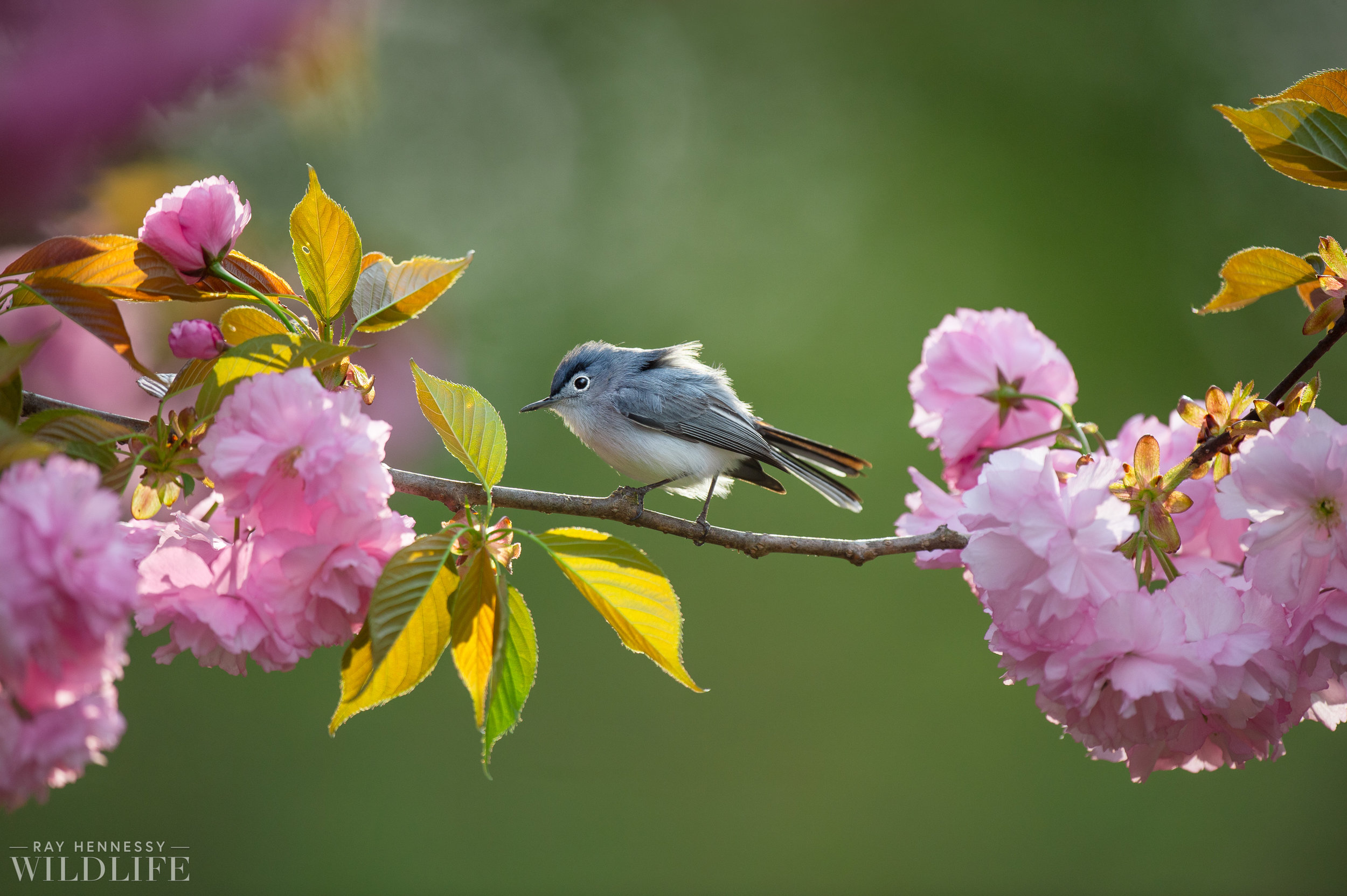 033_spring-warblers-new-jersey.jpg