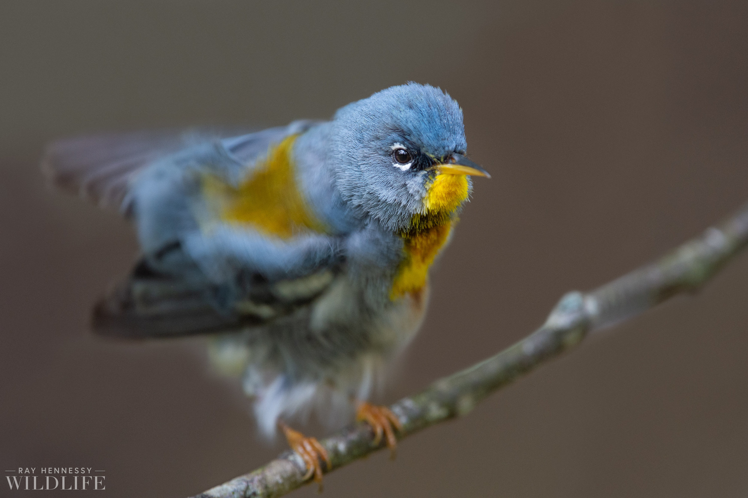 011_spring-warblers.jpg