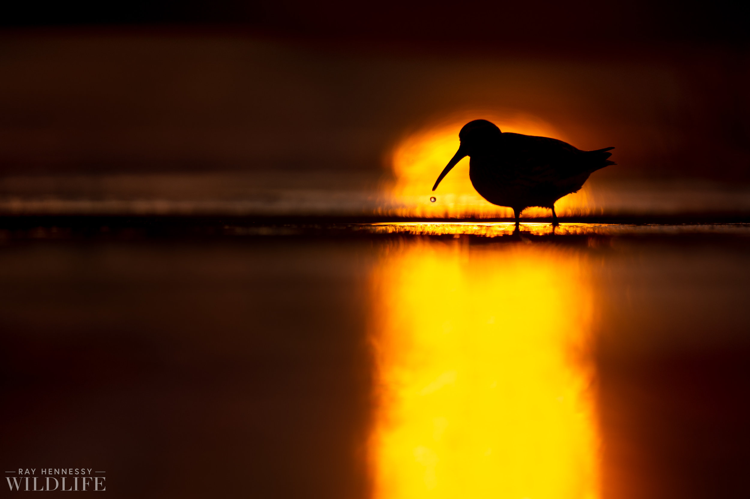 001_shorebirds-prothonotary-warbler.jpg