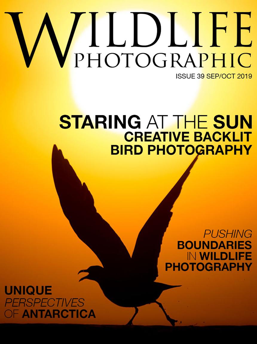 WP Issue 39.jpg