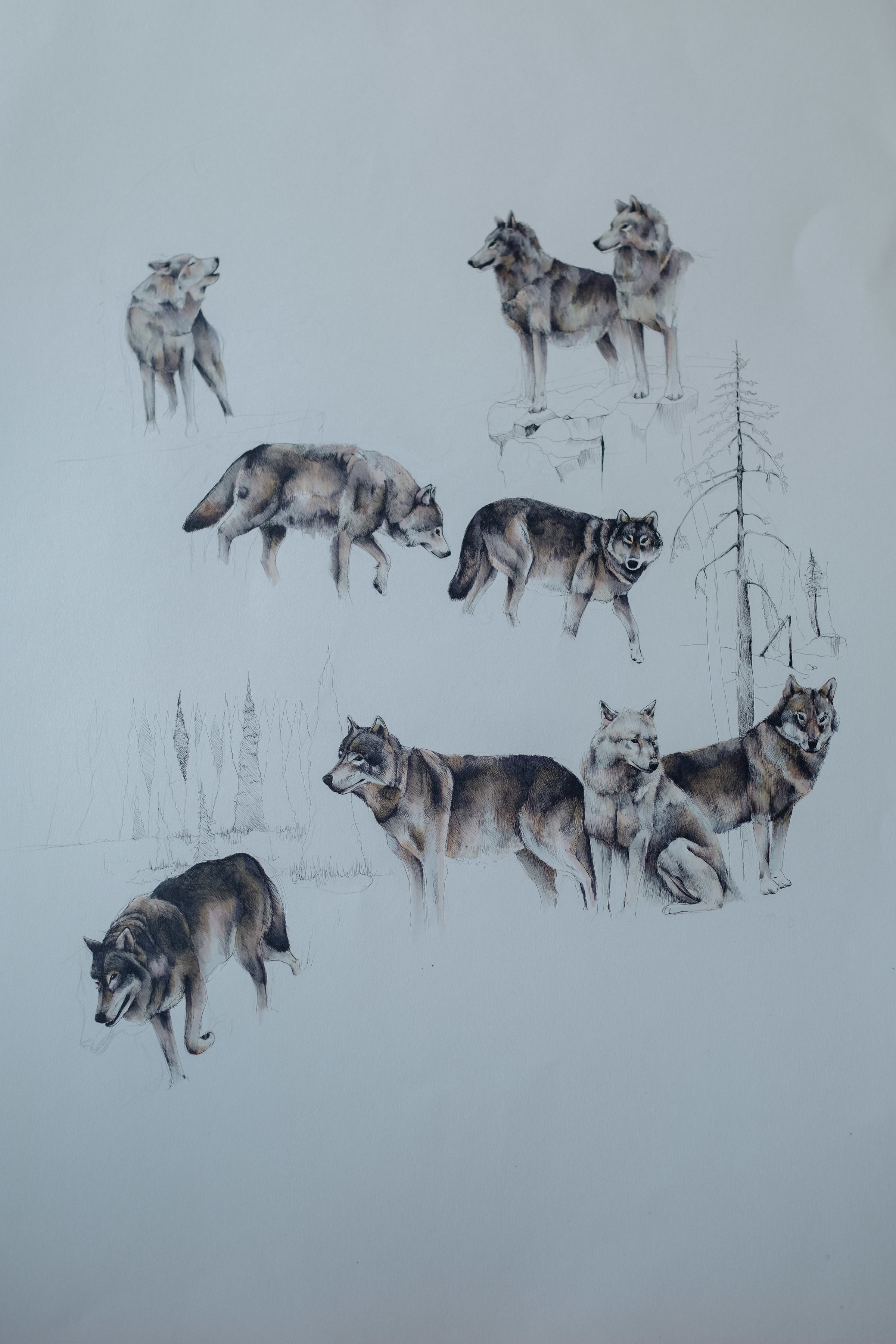 Gray Wolves - (detail)