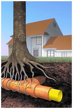 drain unblocking roots