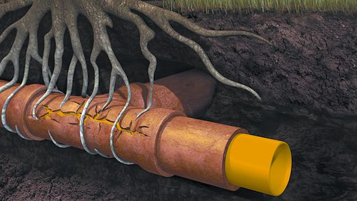 No More Roots — Blocked Drains? | Drain Unblockers Auckland Wide