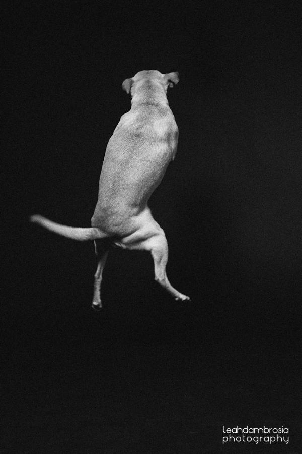 jumpingbean-2.jpg