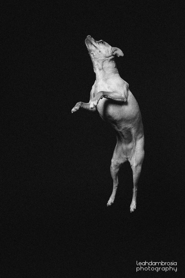 jumpingbean-5.jpg