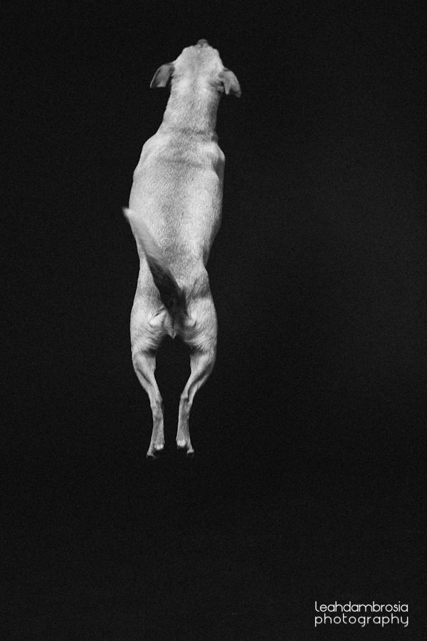 jumpingbean-3.jpg