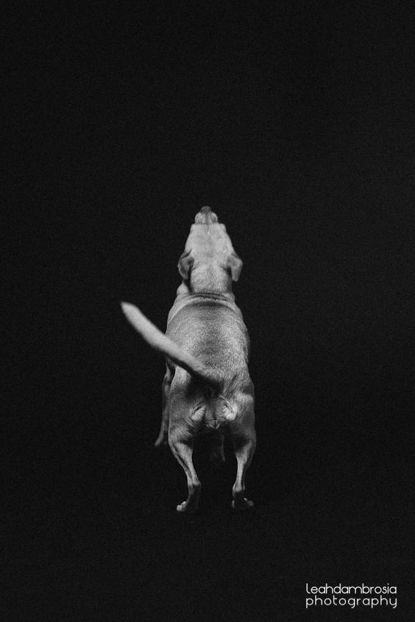 jumpingbean-4.jpg