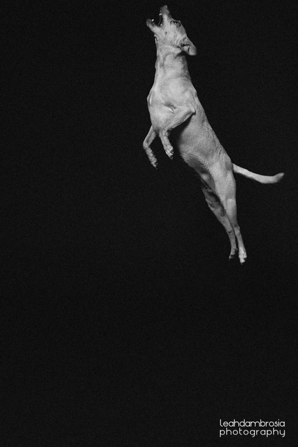 jumpingbean-7.jpg