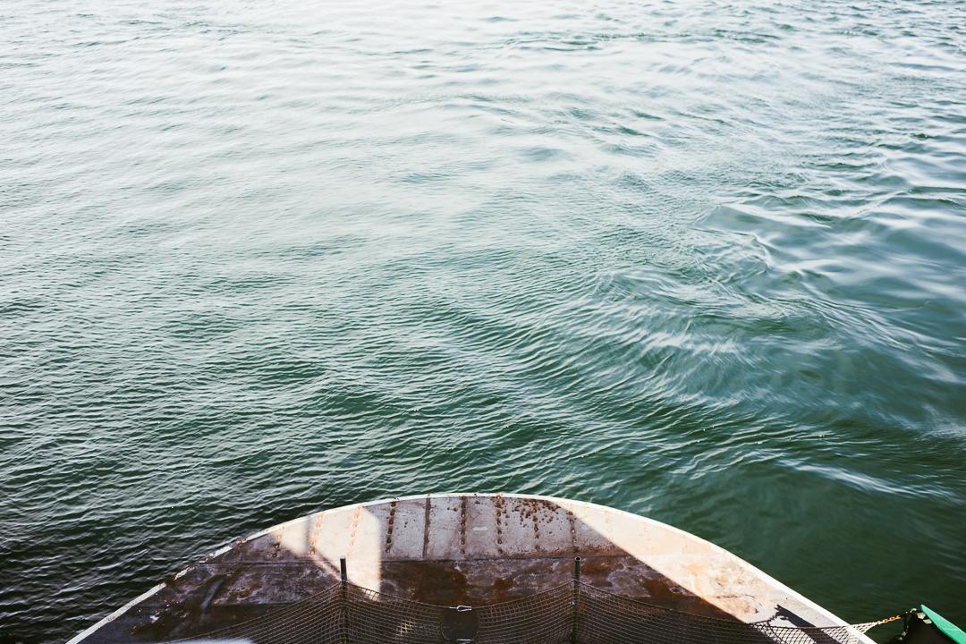 Orcas_blog-28.jpg