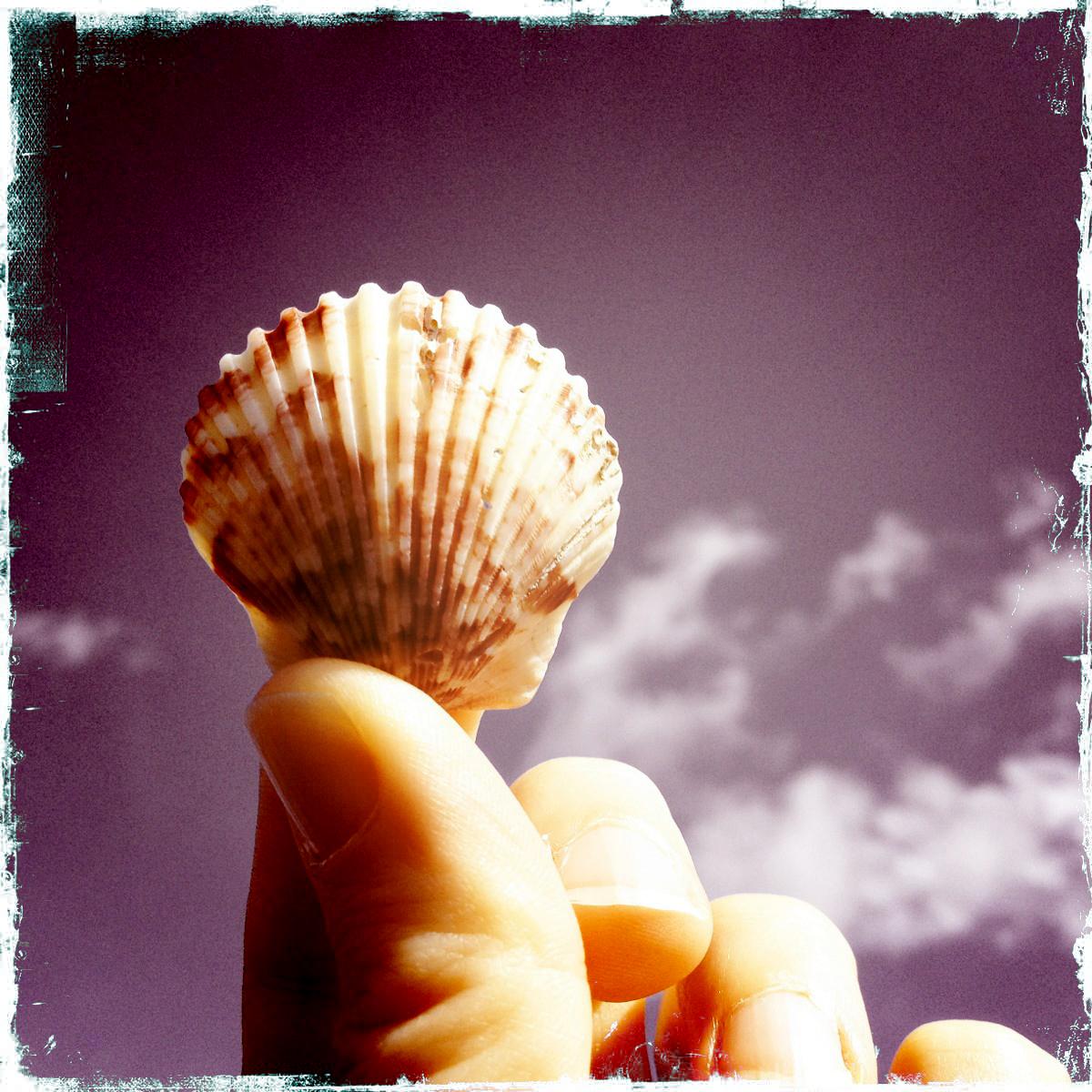 Camino-Shell.jpg