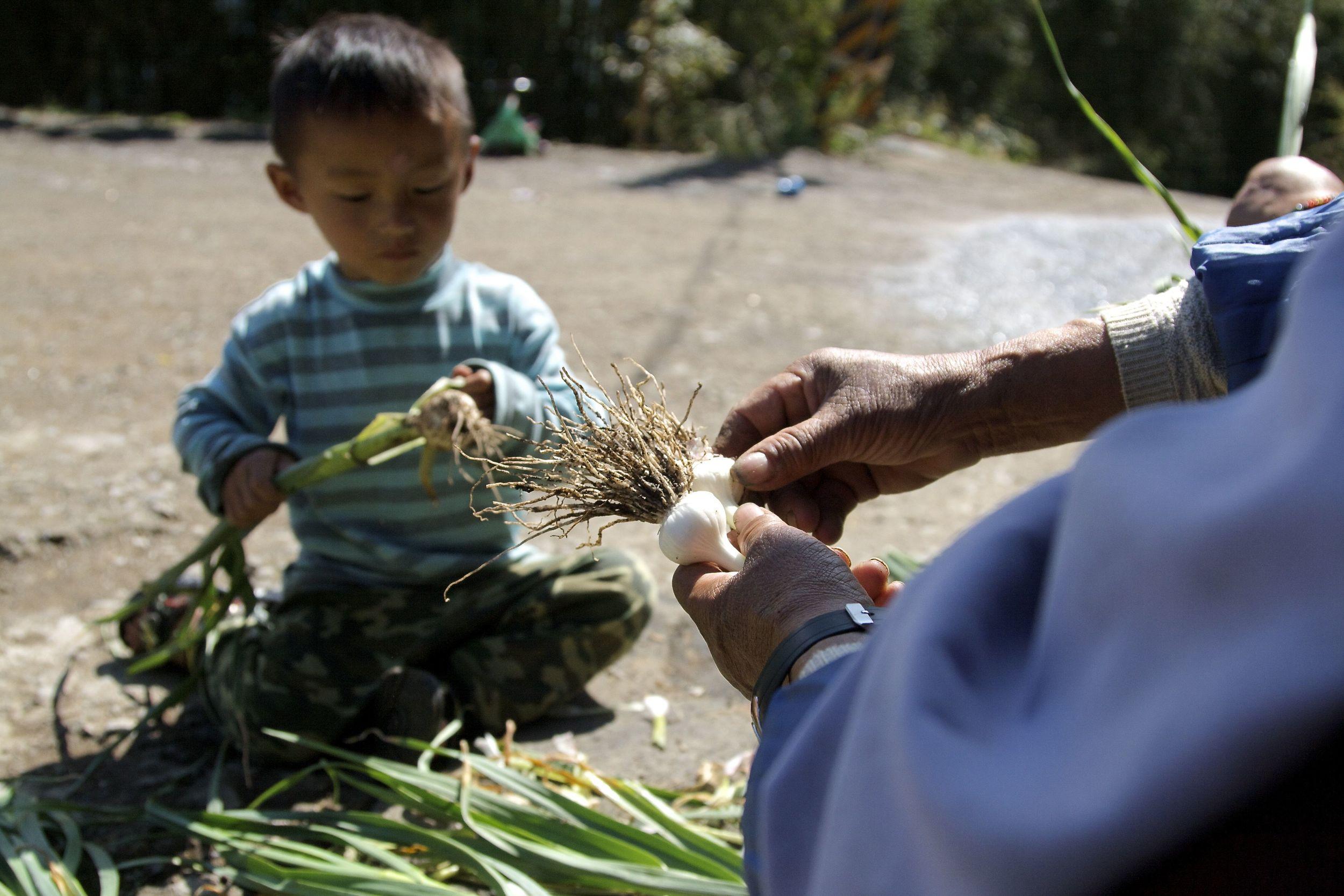 農耕-台灣新竹尖石鄉