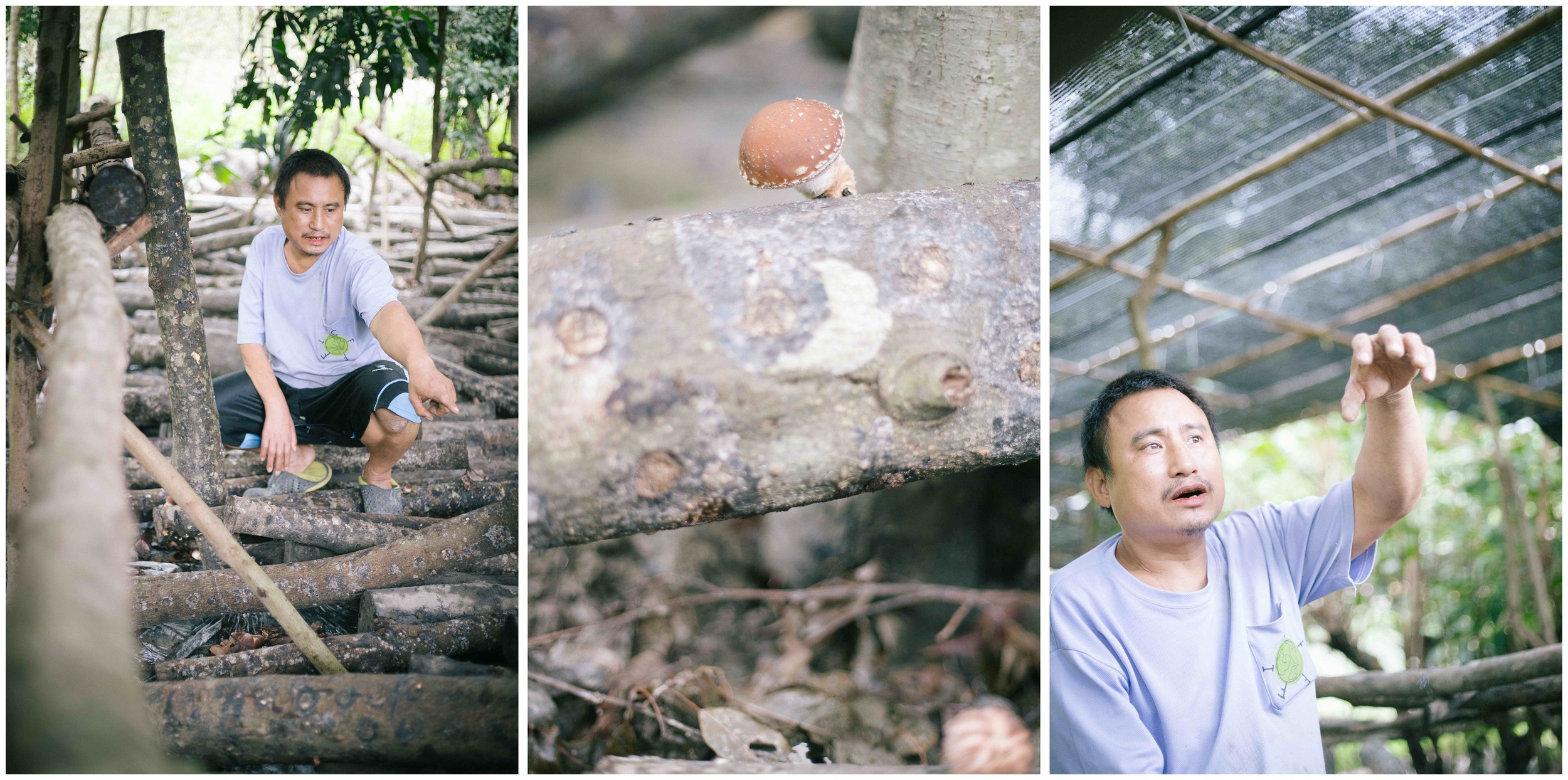 mushroom man.jpg