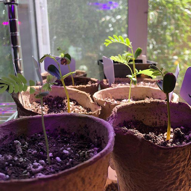 [seedlings intensify] 🌱🌿🌳