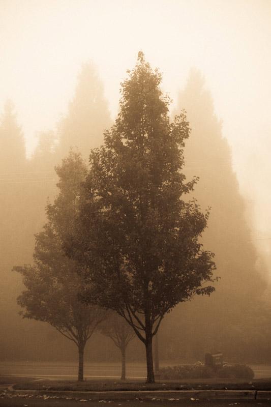 kim-campbell_photographer_lone-fog_-4.jpg