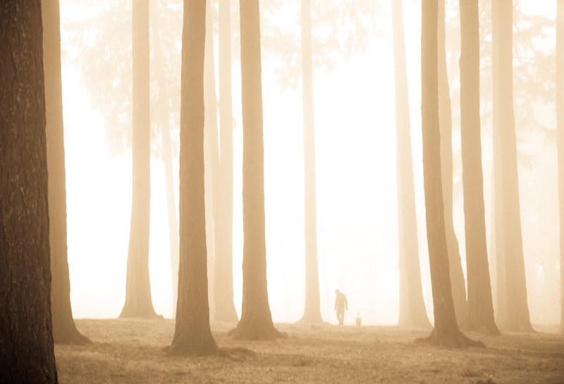 kim-campbell_photographer_lone-fog_9448.jpg