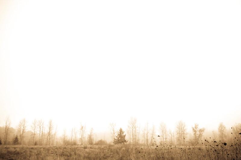 kim-campbell_photographer_lone-fog_9513.jpg