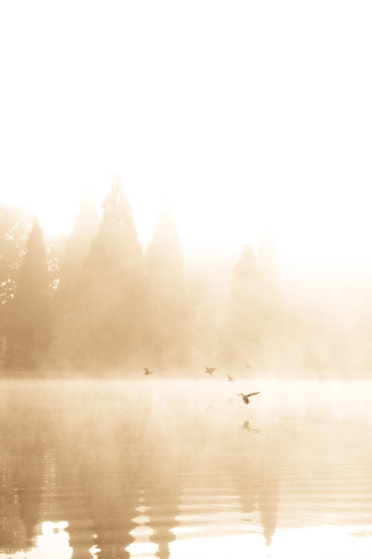 kim-campbell_photographer_lone-fog_0140.jpg