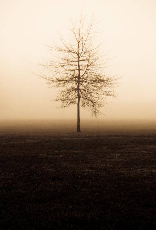 Lone Fog (2012)