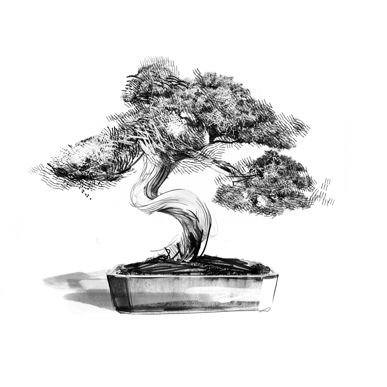 Wardian ObjectsBonsai Tree.jpg