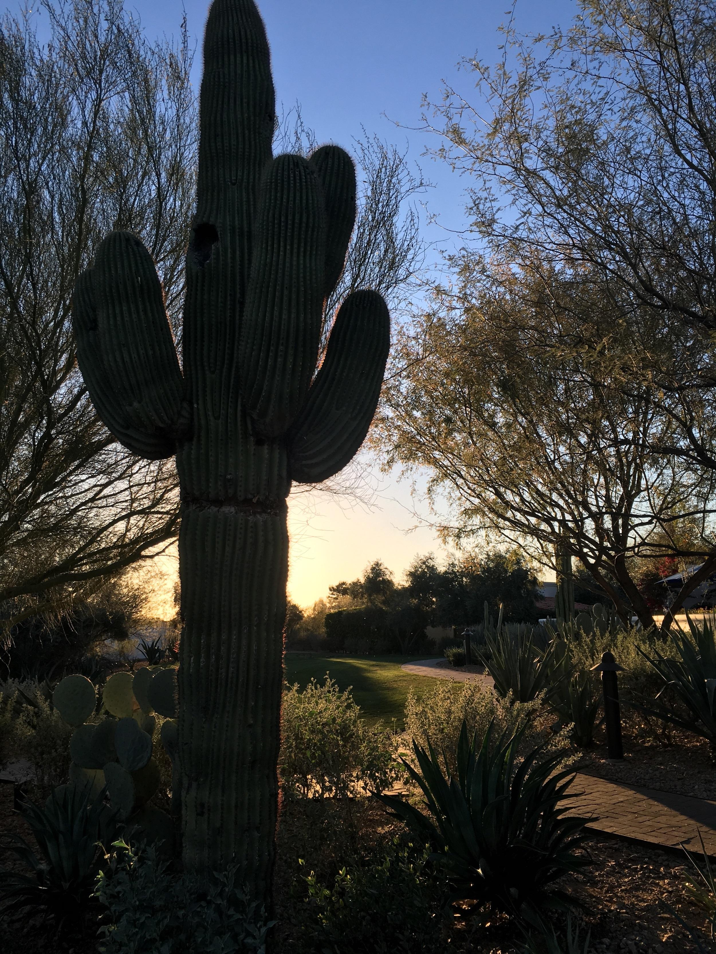 Desert light part 2. (El Chorro)