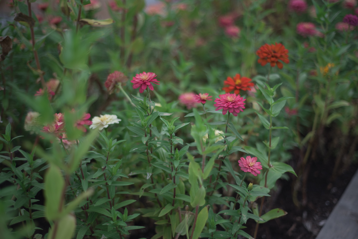 Magnolia Market Seed Supply Waco-32.jpg