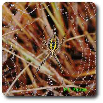 It's not hard to imagine why shimmering tinsel conjures thoughts of beautiful spider webs.