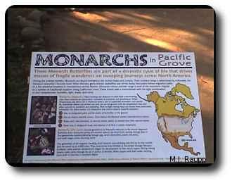 Maps explain secrets of the monarch's migration.