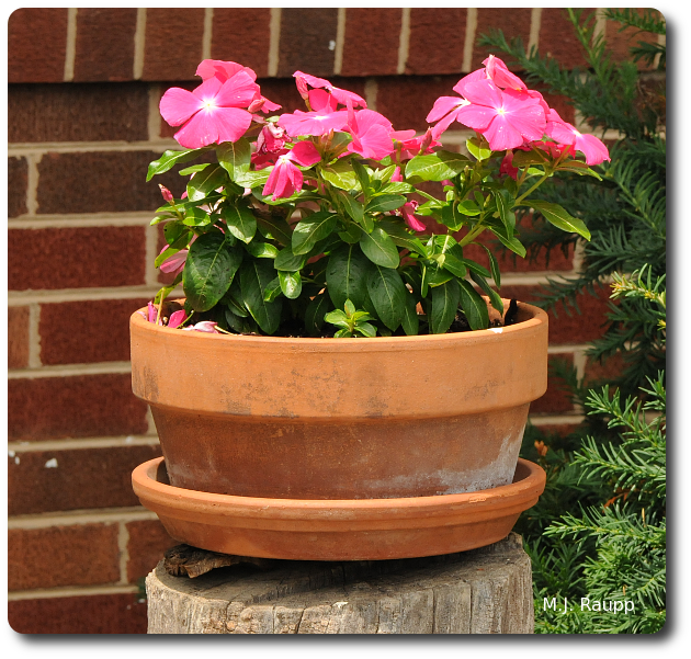 The hollow log beneath the flowerpot is the perfect spot for a paper wasp's nest.