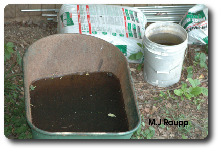 Wheelbarrows and pails filled with water are breeding sites for thousands of mosquitoes.