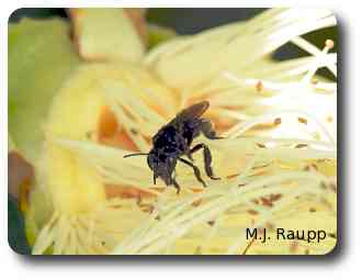 Workers gather nectar and pollen from many beautiful tropical plants.