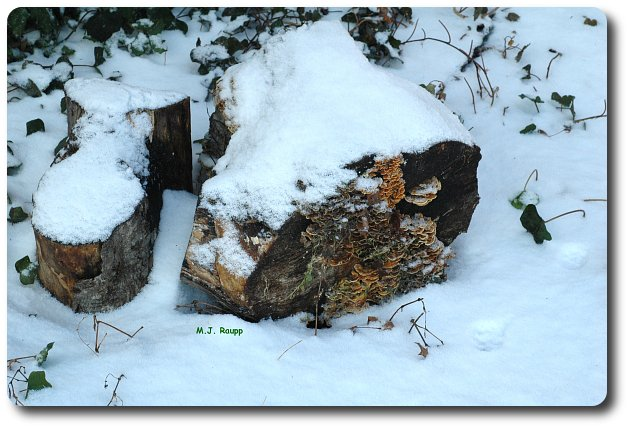 There's always something interesting beneath a rotting log.