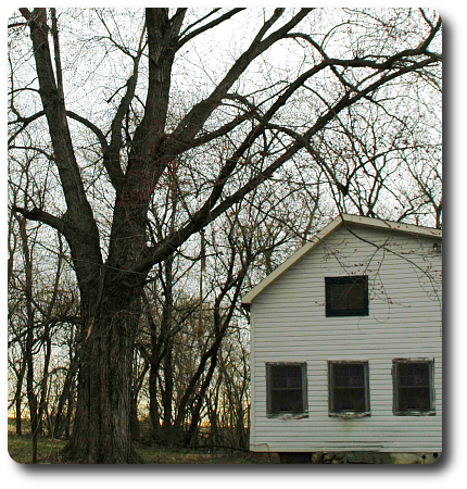 Maples, boxelders, and ashes surrounding this house produce a fine crop of seeds to feed thousands of boxelder bugs.