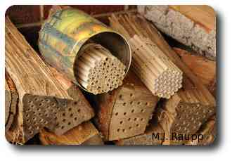 Suitable accommodations for mason bees.