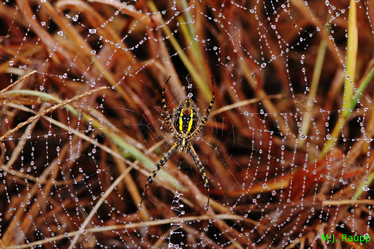 """It's not hard to imagine why shimmering tinsel conjures thoughts of beautiful spider webs.      Normal   0           false   false   false     EN-US   X-NONE   X-NONE                                                                                                                                                                                                                                                                                                                                                                    /* Style Definitions */  table.MsoNormalTable {mso-style-name:""""Table Normal""""; mso-tstyle-rowband-size:0; mso-tstyle-colband-size:0; mso-style-noshow:yes; mso-style-priority:99; mso-style-parent:""""""""; mso-padding-alt:0in 5.4pt 0in 5.4pt; mso-para-margin-top:0in; mso-para-margin-right:0in; mso-para-margin-bottom:10.0pt; mso-para-margin-left:0in; line-height:115%; mso-pagination:widow-orphan; font-size:11.0pt; font-family:""""Calibri"""",""""sans-serif""""; mso-ascii-font-family:Calibri; mso-ascii-theme-font:minor-latin; mso-hansi-font-family:Calibri; mso-hansi-theme-font:minor-latin;}"""