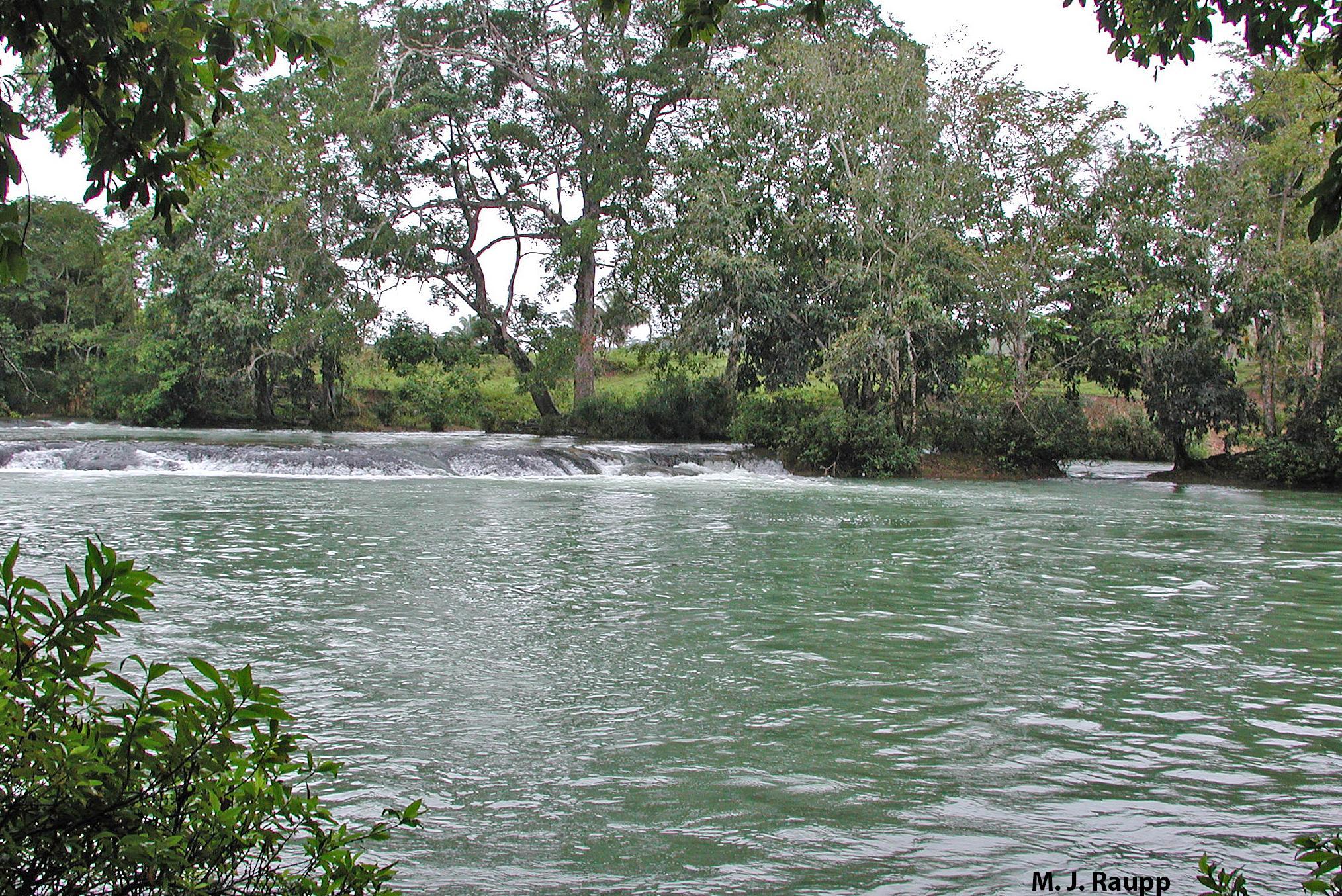 Battling bewildering botlass flies in Belize: Black flies