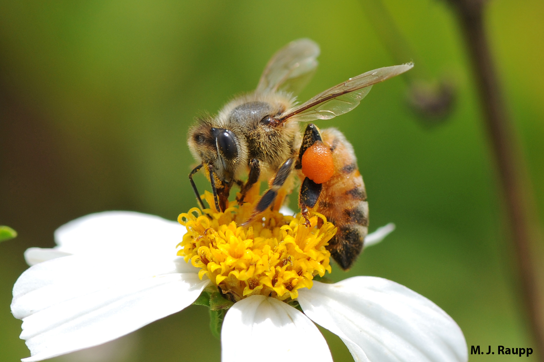 Honey bees and their allies are responsible for pollinating crops which comprise about every third bite of food we eat.