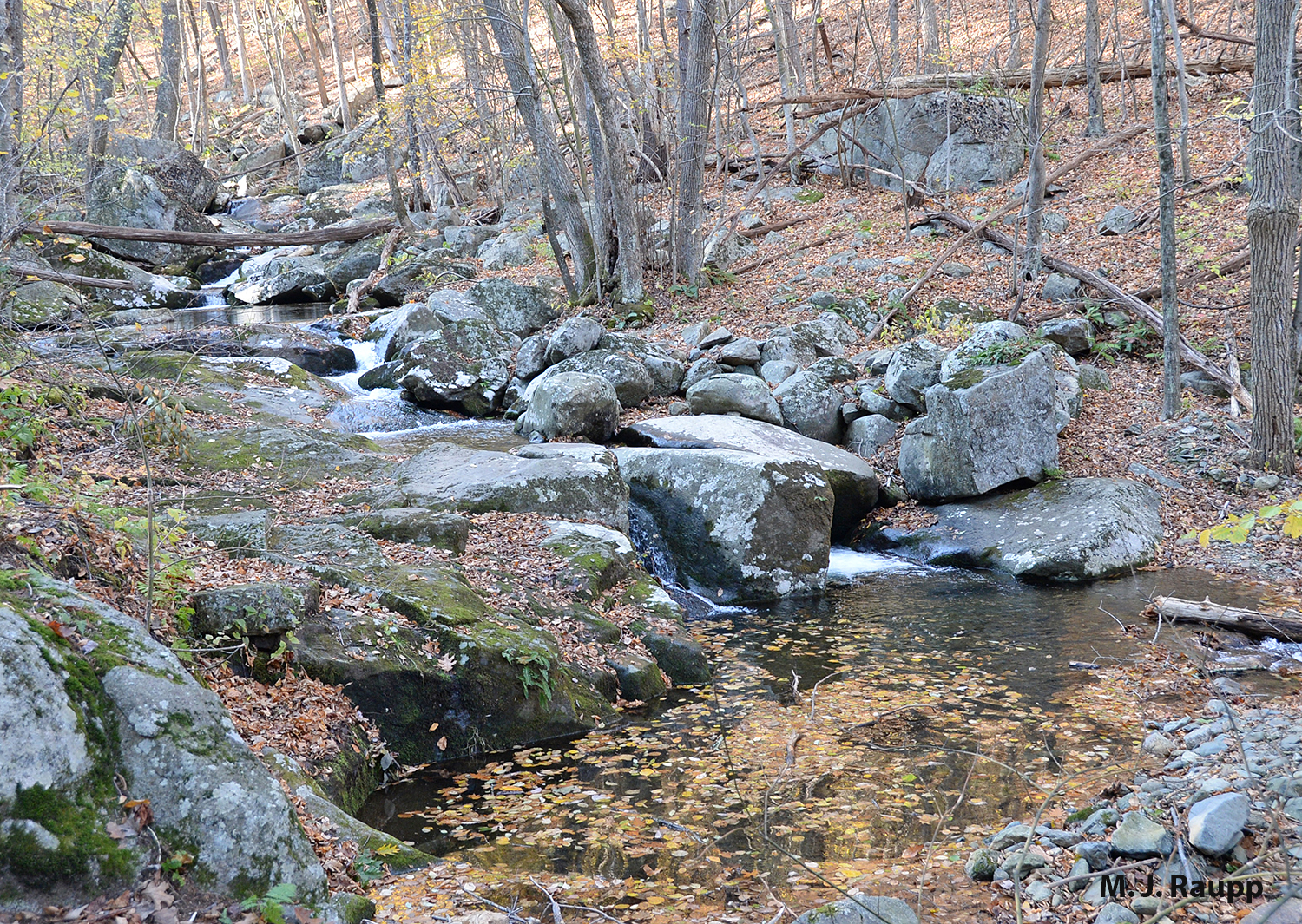 Pristine streams like this one in Shenandoah National Park are excellent breeding sites for mayflies.